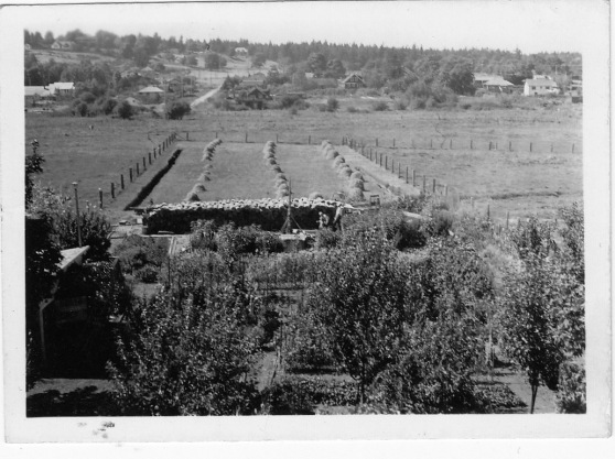 UCC farm pic