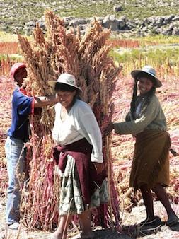 2012-11-30-quinoa