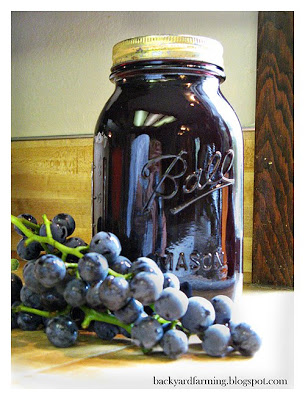 grapes--making homemade graper juice in a steamer canned