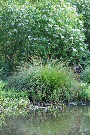 large sedge-aquascapes.